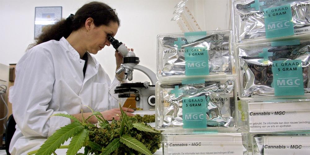 CBD Untersuchung im Labor
